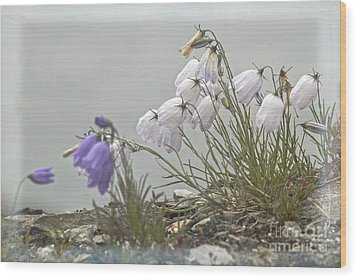 Wood Print featuring the photograph Bellflower by Heiko Koehrer-Wagner