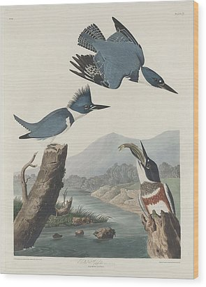 Belted Kingfisher Wood Print by Dreyer Wildlife Print Collections