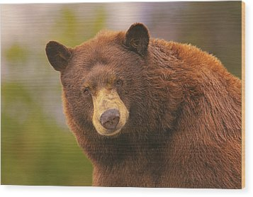 Black Bear Wood Print by Brian Cross