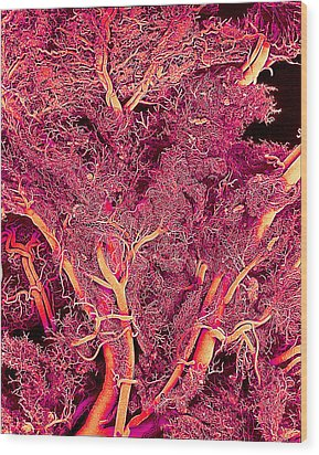 Blood Vessels, Sem Wood Print by Susumu Nishinaga