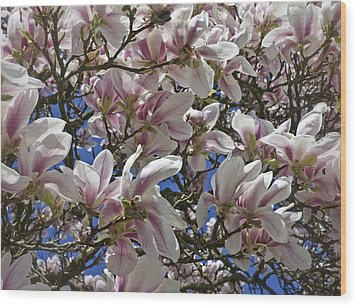 Blossom Magnolia White Spring Flowers Photography Wood Print by Artecco Fine Art Photography