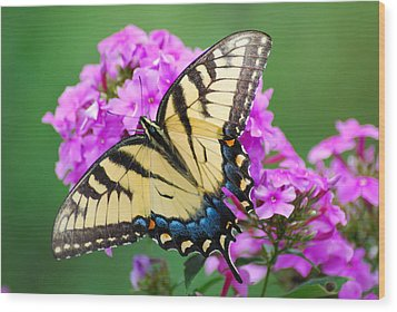 Butterfly  Wood Print by Kathy Gibbons