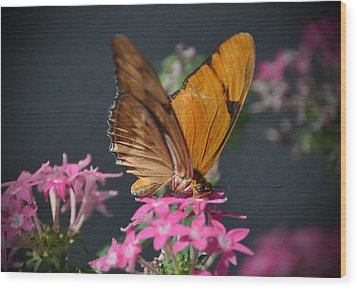 Wood Print featuring the photograph Butterfly by Savannah Gibbs
