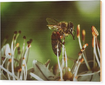 Wood Print featuring the photograph Bzzz by Michael Siebert