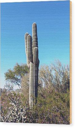 Wood Print featuring the photograph Cactus  by Catherine Lau