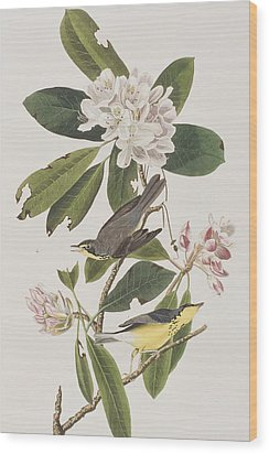 Canada Warbler Wood Print by John James Audubon