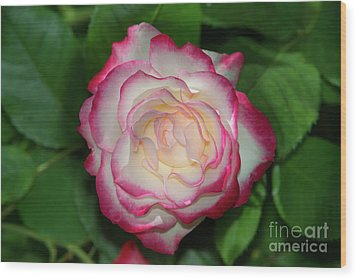 Cherry Parfait Rose Wood Print by Glenn Franco Simmons