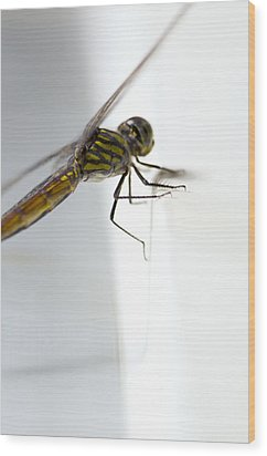Close Up Shoot Of A Anisoptera Dragonfly Wood Print