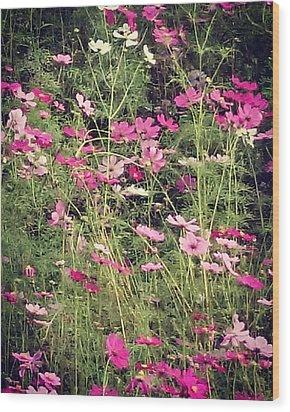 Cosmos Flowers  Wood Print by Sobajan Tellfortunes