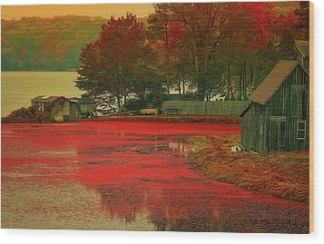 Cranberry Farm Wood Print by Gina Cormier