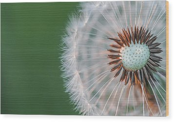 Wood Print featuring the photograph Dandelion by Bess Hamiti