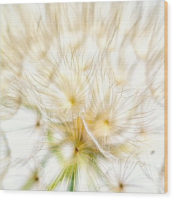 Dandelion Wood Print by Stelios Kleanthous