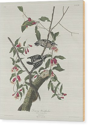 Downy Woodpecker Wood Print by Rob Dreyer