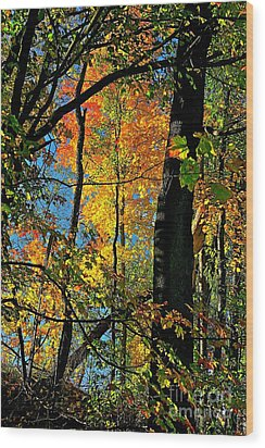 Fall Fire Works Wood Print by Robert Pearson