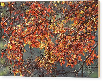 Wood Print featuring the photograph Fall Leaves by Nicholas Burningham