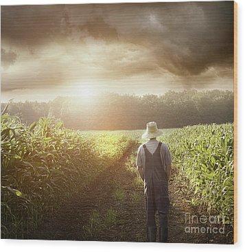 Farmer Walking In Corn Fields At Sunset Wood Print