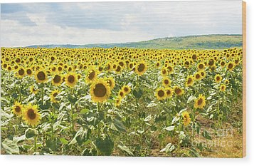Field With Sunflowers Wood Print by Irina Afonskaya