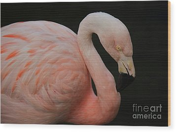 Flamingo Wood Print by Paulette Thomas
