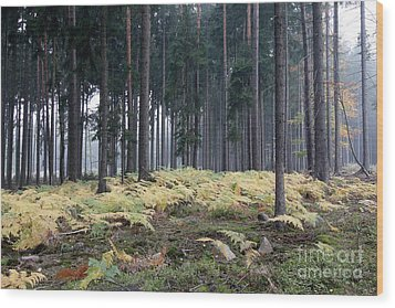 Fog In The Forest With Ferns Wood Print by Michal Boubin