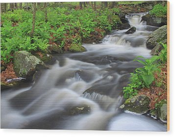 Forest Stream In Spring Wood Print by John Burk