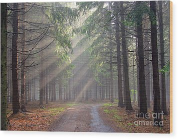 God Beams - Coniferous Forest In Fog Wood Print