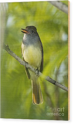 Great Crested Flycatcher Wood Print by Anthony Mercieca