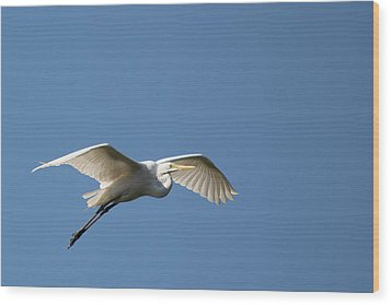 Great Egret Wood Print by Linda Geiger