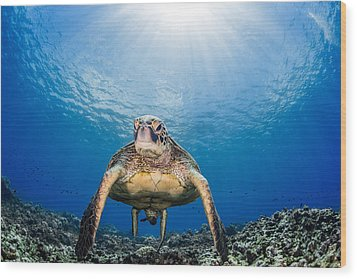 Hawaiian Turtle Wood Print
