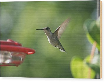 Hummer Wood Print by Heidi Poulin