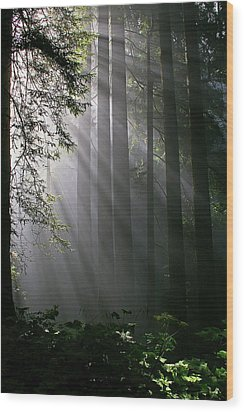 In The California Redwood Forest. Wood Print