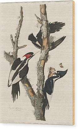 Ivory-billed Woodpecker Wood Print by Rob Dreyer
