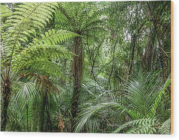 Wood Print featuring the photograph Jungle Ferns by Les Cunliffe