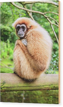 Wood Print featuring the photograph Lar Gibbon by Alexey Stiop