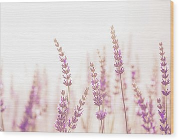 Lavender Flower In The Garden,park,backyard,meadow Blossom In Th Wood Print
