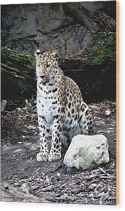 Leopard Wood Print by Janice Spivey