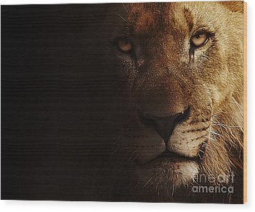 Wood Print featuring the photograph Lion by Christine Sponchia