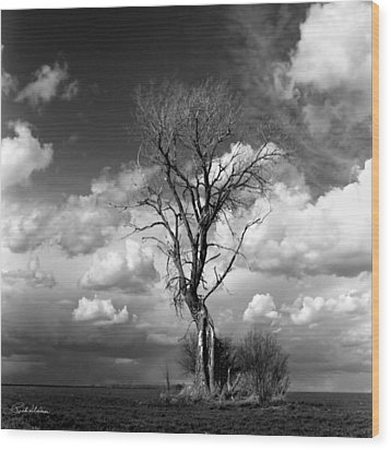Lone Tree Wood Print by Rich Stedman