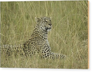Lovely Leopard Wood Print by Michele Burgess