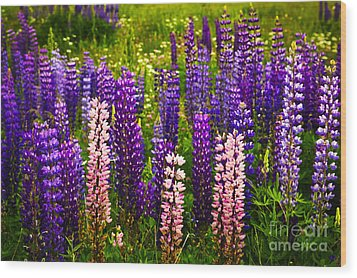 Lupin Flowers In Newfoundland Wood Print by Elena Elisseeva