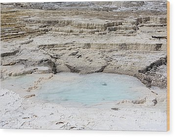Mammoth Hot Springs Upper Terraces In Yellowstone National Park Wood Print by Louise Heusinkveld