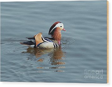 Wood Print featuring the photograph Mandarin Duck by Michal Boubin