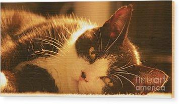 Max The Cat Wood Print by David Warrington