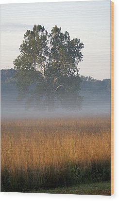 Morning Mist Wood Print by Heidi Poulin