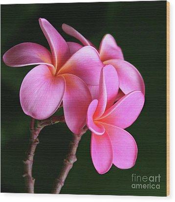 Na Lei Pua Melia Aloha He Ala Nei E Puia Mai Nei Pink Plumeria Wood Print by Sharon Mau