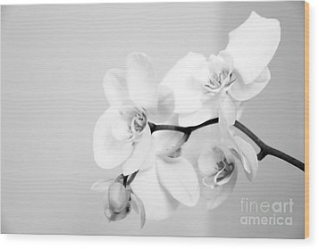 Orchid Wood Print by Amanda Barcon
