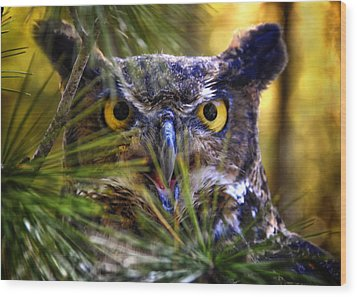 Owl In The Pines Wood Print