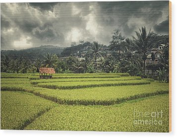 Wood Print featuring the photograph Paddy Field by Charuhas Images