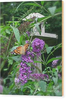 Painted Lady Butterfly Wood Print by Nancy Patterson