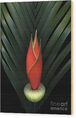 Palm Of Fire Wood Print