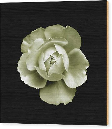 Wood Print featuring the photograph Peony by Charles Harden